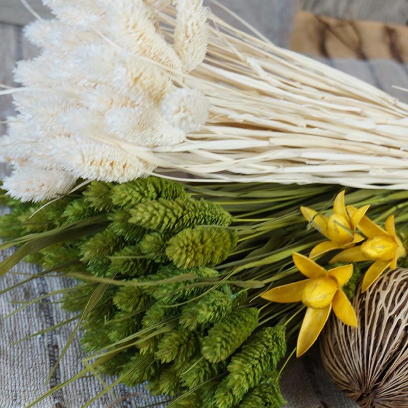 20Pcs Dried Natural Flower Bouquets Colorful Lagurus Ovatus Uraria Picta Rabbit Tail Grass Bunches