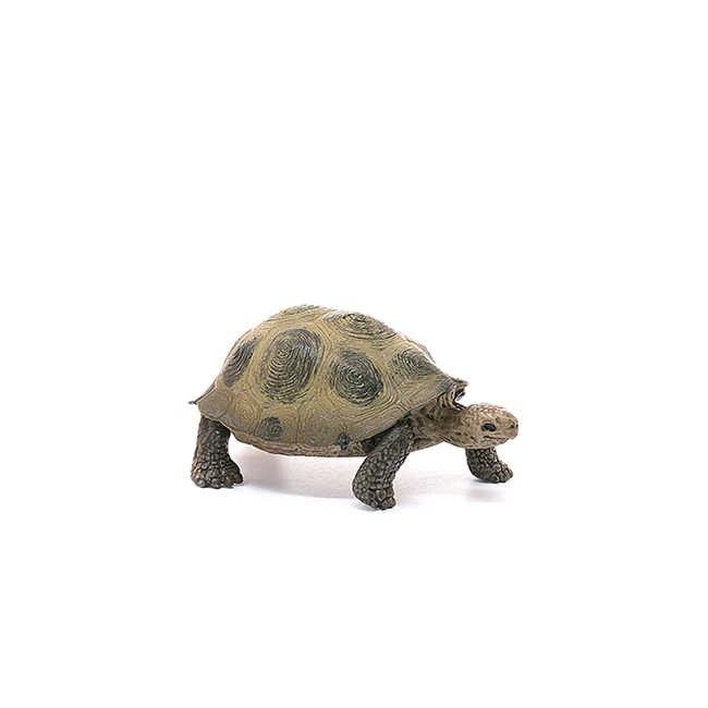 Original genuína vida selvagem zoológico animal modelo tartaruga gigante figuras colecionáveis estatueta crianças brinquedos educativos crianças
