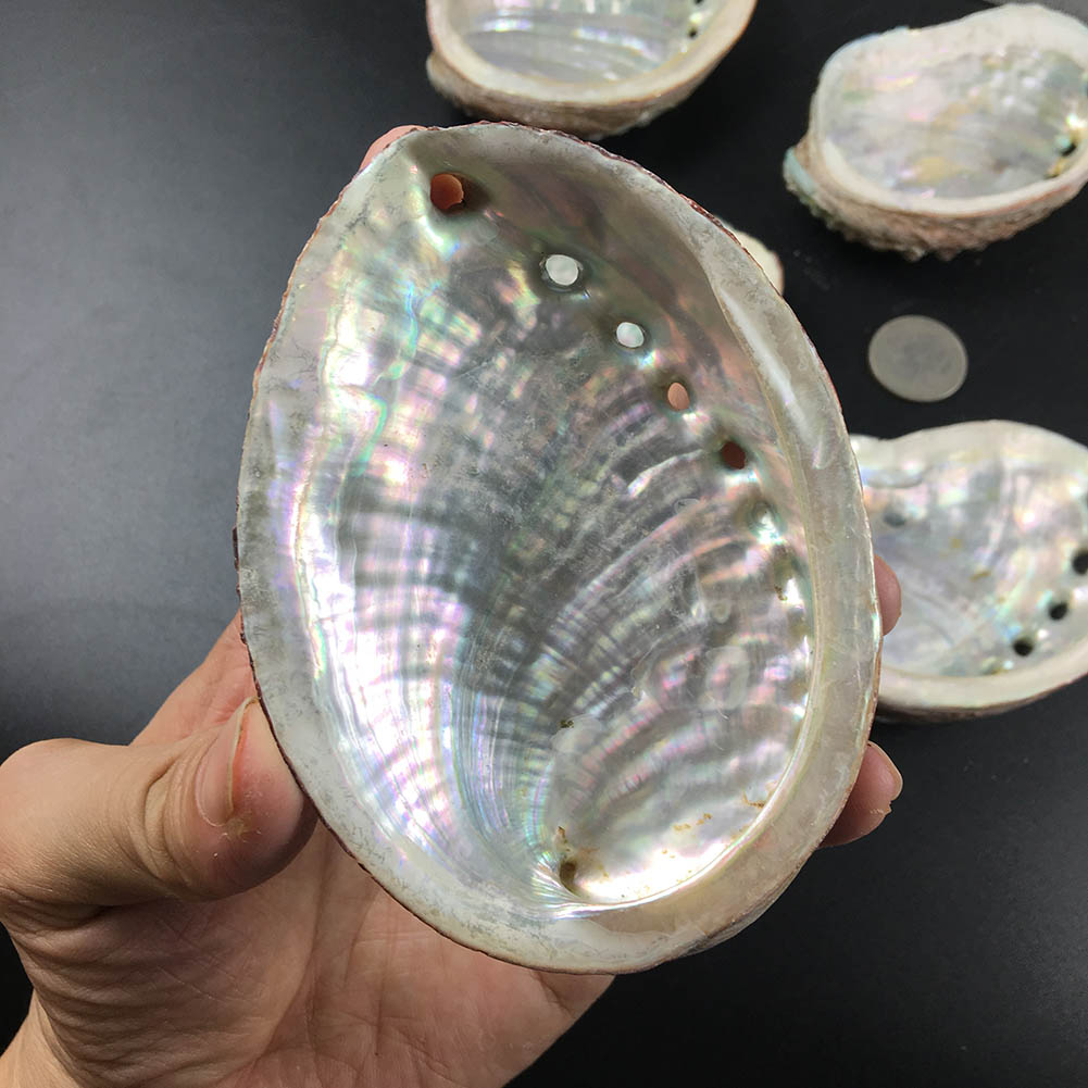 Pacific Natural Abalone Shells Seashell Home Aquarium Landscape DIY Decor Soap Holder 9-10cm Craft Collectable Jewelry Holder