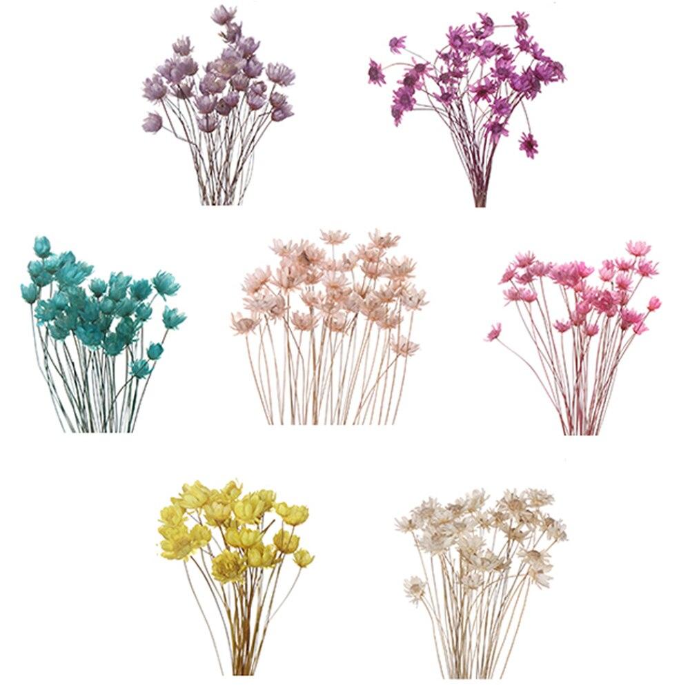 30 шт Мини Маргаритка маленькая звезда Цветы Букет сушеные цветы натуральные растения сохранение цветочные для свадьбы украшения дома поставки
