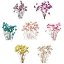 30 pçs mini daisy pequena estrela flores bouquet flores secas plantas naturais preservar floral para o casamento casa decoração suprimentos