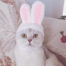 Costume Headgear Bunny Ears-Hat Dogs Kitten Rabbit Small Pet-Products Cosplay