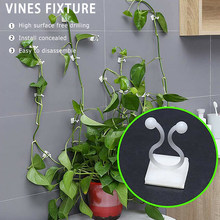 10pcs Invisible Wall Rattan Clamp Clip Agriculture Plant Fixing Clips Vine Vegetable Fixing Clamping Tools Bracket Gardening(China)