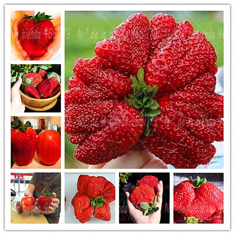 Giant Japan Strawberry Bonsais Plants, 300Pcs Giant Red Strawberry Organic Bonsais Garden Plants Pot Planting
