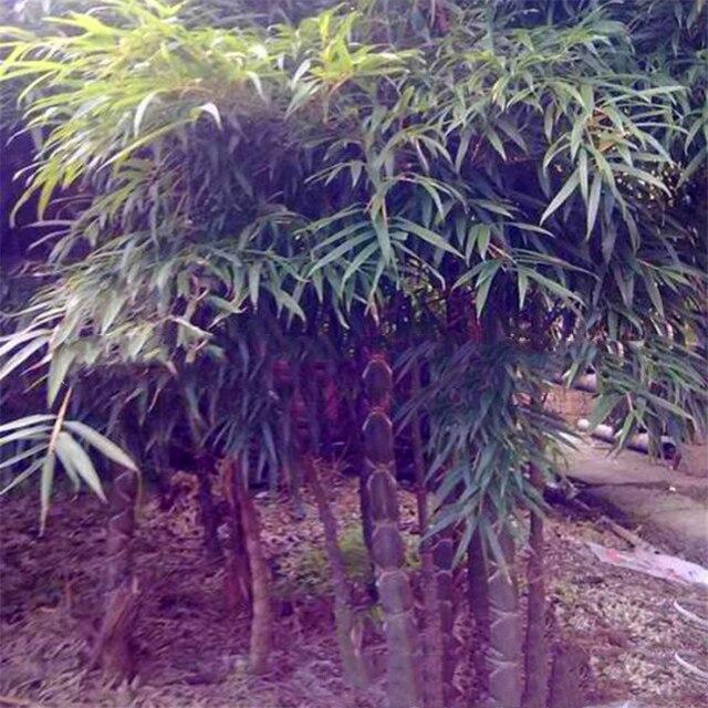 Plant Flowers Bath Salts Turtle bamboo Essence 100Pcs XZZ-176 2