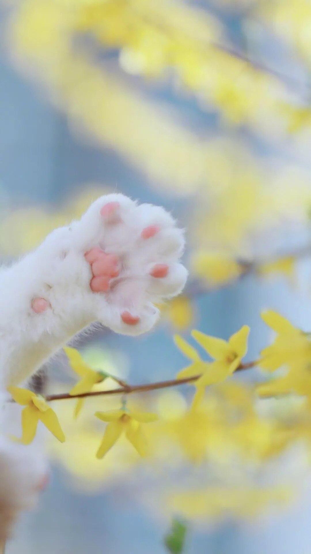 猫片壁纸 :生活不断拍打我们的脸皮,最后不是脸皮厚了,是肿了!插图49