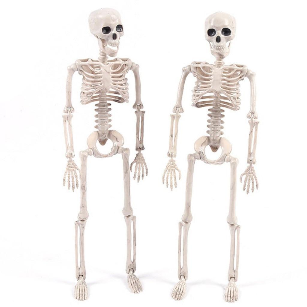 Halloween Prop Human Skeleton Full Size Skull Hand Life Body Anatomy Model Decor