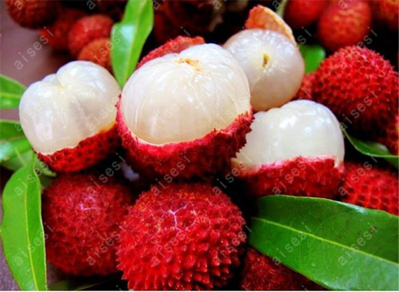 5 PCS  Red Fruits Plant As Litchi Very Delicious Giant Plant Tree Also As A Home Garden Ornamental Trees