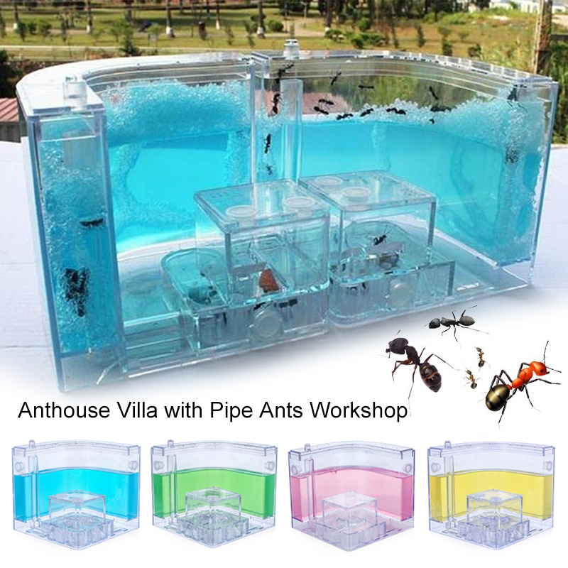 10.8CM Ants House Art Habitat Fanny Ant Nest Decoration Pet Toy Colorful Specially Acrylic Ant Farm Transparent Feeding Area