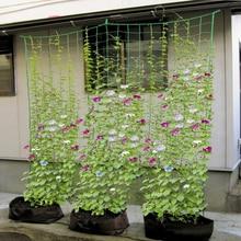 Net-Holder Petunia Climbing-Nylon-Net Gardening-Network-Plant-Support Morning for Cucumber