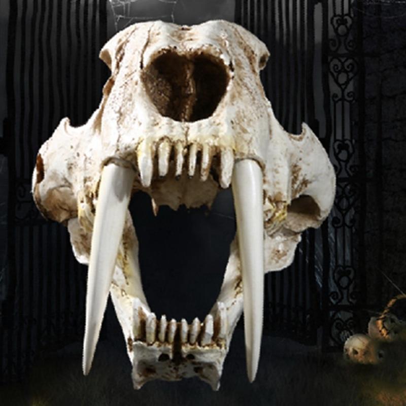 sabre gato tigre crânio saberdente smilodon fatalis