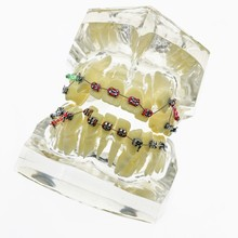 Teeth-Models Teaching Dentist And Malocclusion Hospital Are Used-For