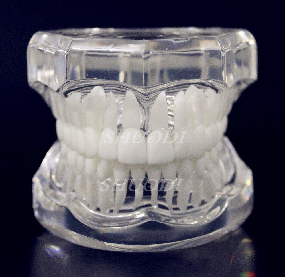 1 шт. Стоматологическая стандартная модель зуба Ортодонтическая модель для связи пациента стоматологическая клиника - Цвет: White