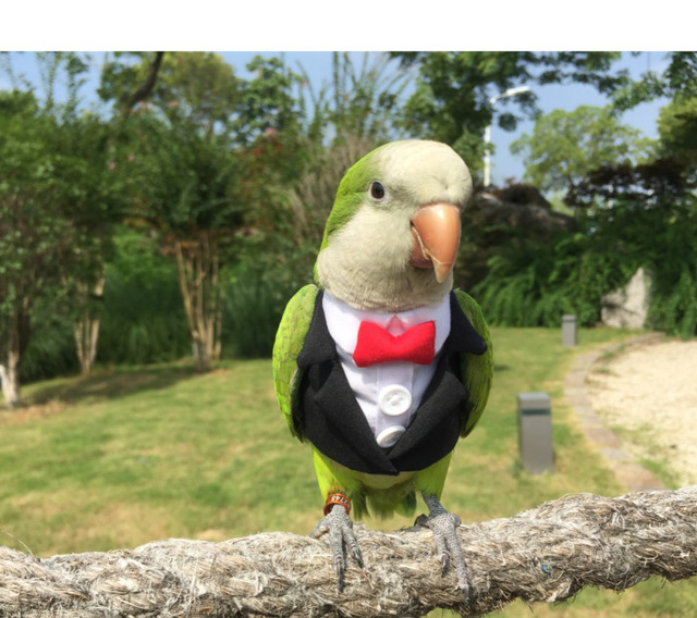 Parrot Cocktail Suit With Snazzy Bowtie  5