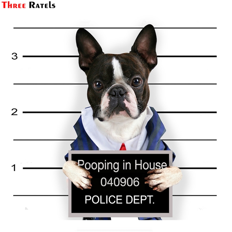 Three Ratels FTC-882 Cute Guilty Of Love French Bull Boston Terrier Dog Car Sticker Decal For Guitar Laptop Classic Sticker Toys