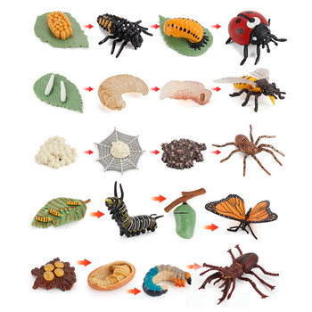10 Sets Animal Life Growth Cycle Simulation Model Bee Ladybird Spider Bettle Butterfly Biology Nature Learning Toys 1