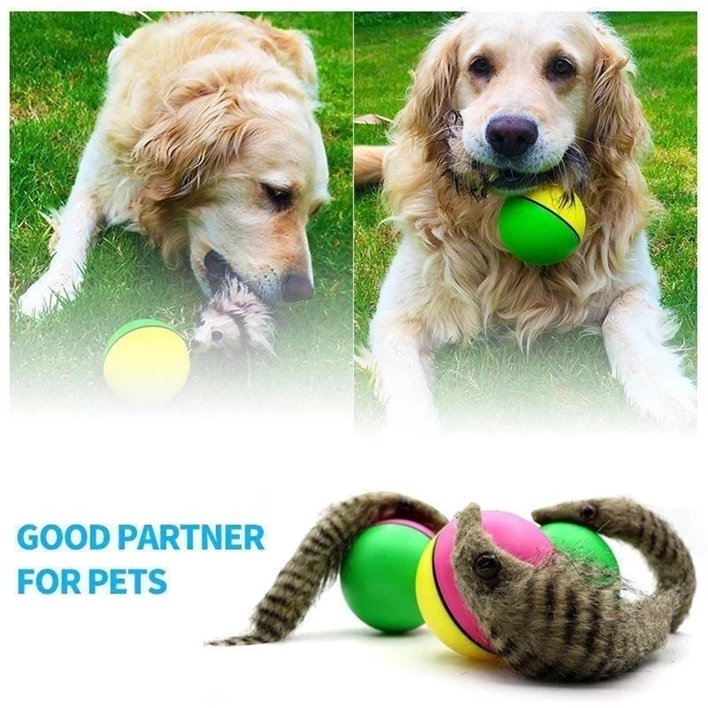 Cute Dog Toys Interactive Pet Dog Ball Toy Cat Toy With Small Bell Rainbow Dogs Play Balls For Pets Toys Baby Dog Cat Toys R5 Aliexpress