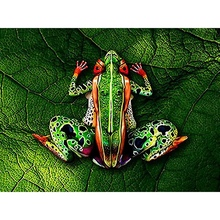 Diamond Painting 5D DIY Paintings Decoration Frog Cross Stitch Home Decor Embroidery