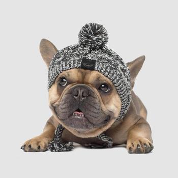 Winter Wool Dog Stocking Hat 1