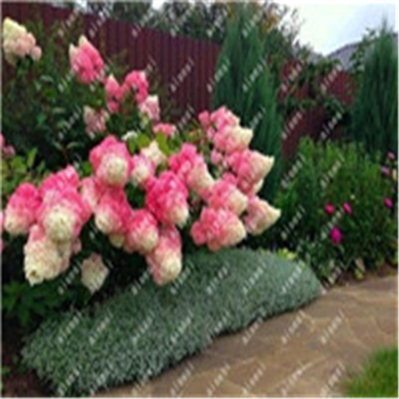 20 Pcs/Bag Hydrangea Flower