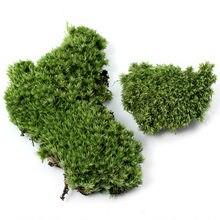 Micro-pierre en peluche Miniature, 1 pièce, DIY, aménagement paysager, maison, jardin, décoration de mariage, accessoires artisanaux, plante en mousse artificielle longue