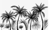 Custom Photo Wallpaper Black and white sketch style tropical rainforest coconut tree Nordic TV background wall 3D Wallpaper