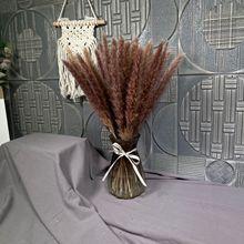 50cm Pampas15Pcs Dry Flower Pampas Grass For party Modern Home Decoration Ceremon Phragmites Fotografia Garden Decoration