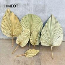 Fleur séchée feuille de ventilateur de palmier plantes feuilles de tournesol décor de maison fenêtre décor d'arc de mariage Arrangement floral suspendu mur de fleurs