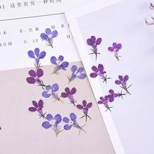 1,5 cm/20 piezas, pétalos de Flores de tacto Real de la naturaleza, Lobelia prensada para velas de bricolaje Craft marcapáginas tarjeta de regalo, Flores secas decoración Facial