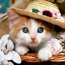 """Полный 5D Diy Daimond Картина Вышивка крестом """"Кот в шляпе"""" 3D Алмазная Живопись Полный Стразы картины вышивка подарки"""
