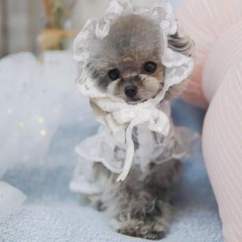 Pet Hat Breathable Good-looking Round Neck Puppy Lace Skirt for Dog Supplies image