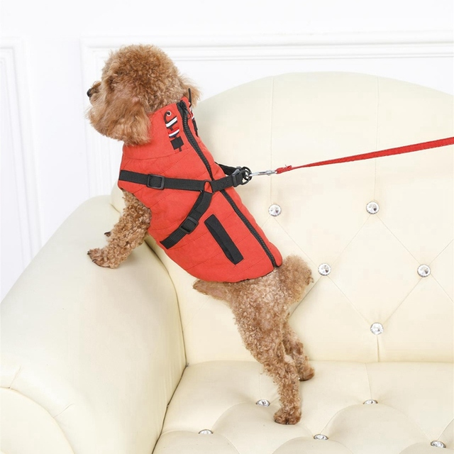 Winter Harness Jacket For Small Dogs  5