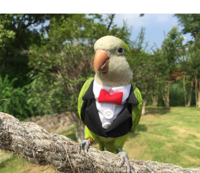 Parrot Cocktail Suit With Snazzy Bowtie  6