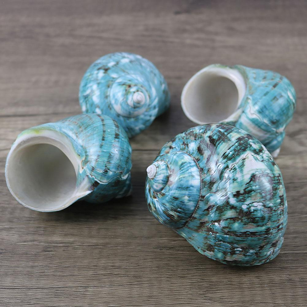 Polished Turban Shells Turbo Seashells Original Natural Large Green Coral Sea Snail Home Fish Tank Decorations crafts DIY