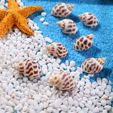 marine natural flowers conch articles Family home decoration aquarium Fish tank landscape Marine theme Party Decor DIY Crafts