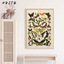 Affiche Vintage d'insecte papillon, toile imprimée, peinture sur toile, éducation biologique, tableau d'art mural, décoration de salle d'étude moderne