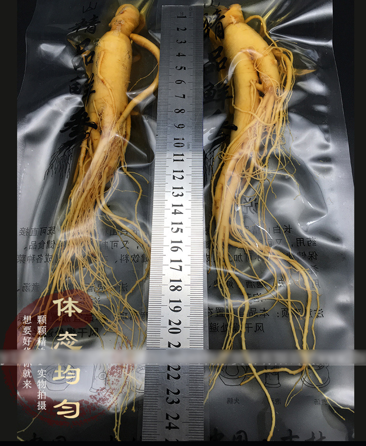 Top Grade Fresh Ginseng Root Vacuum Pack Panax Fresh Ginseng Root 3