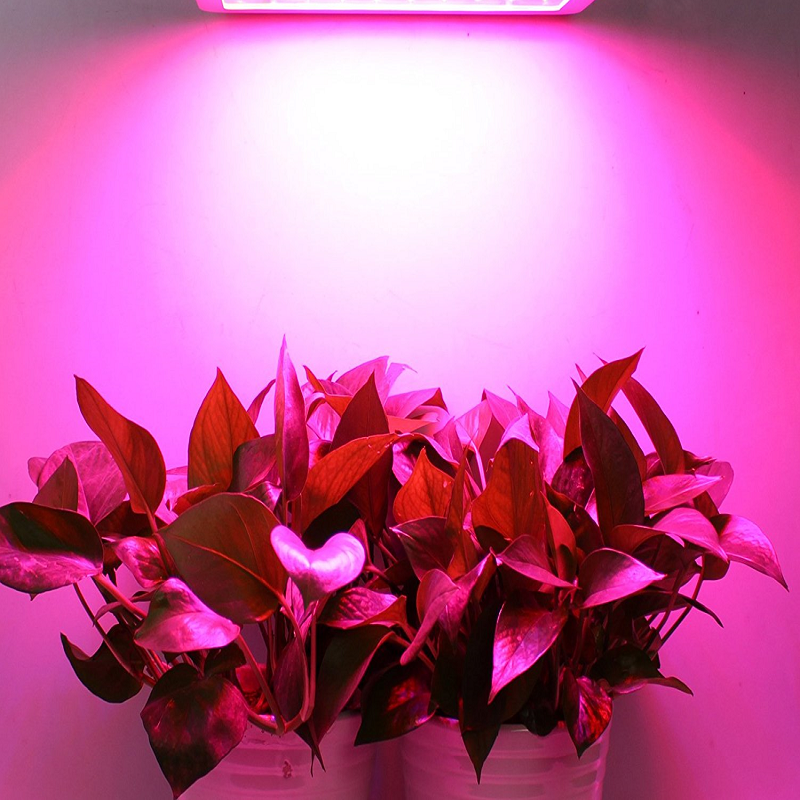 T8 Pink Light 30cm 60cm Double-line 10W 20W 30W 40W 60W 80WT8 Led Grow Light Full Spectrum Indoor Greenhouse Growing <font><b>Tube</b></font> image