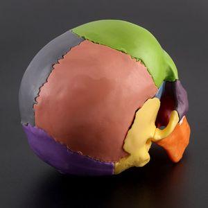Image 3 - 15pcs/set 4D Disassembled Color Skull Anatomical Model Detachable Medical Teaching Tool