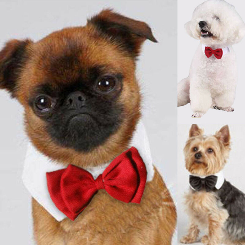 Fashion Adjustable Pet Bows Puppy Kitten Dogs Cat Tie-Collar Necktie Bowknot Clothes For Pets Dog Cat New Strap Styling New 2019