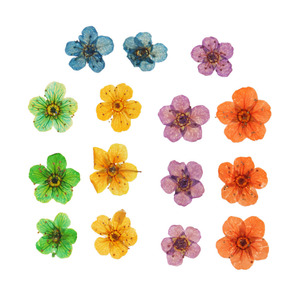 15 Pieces Natural Real Dried Flowers Embellishments for DIY Nail Art Jewelry Making Crafts DIY Pendants Charms