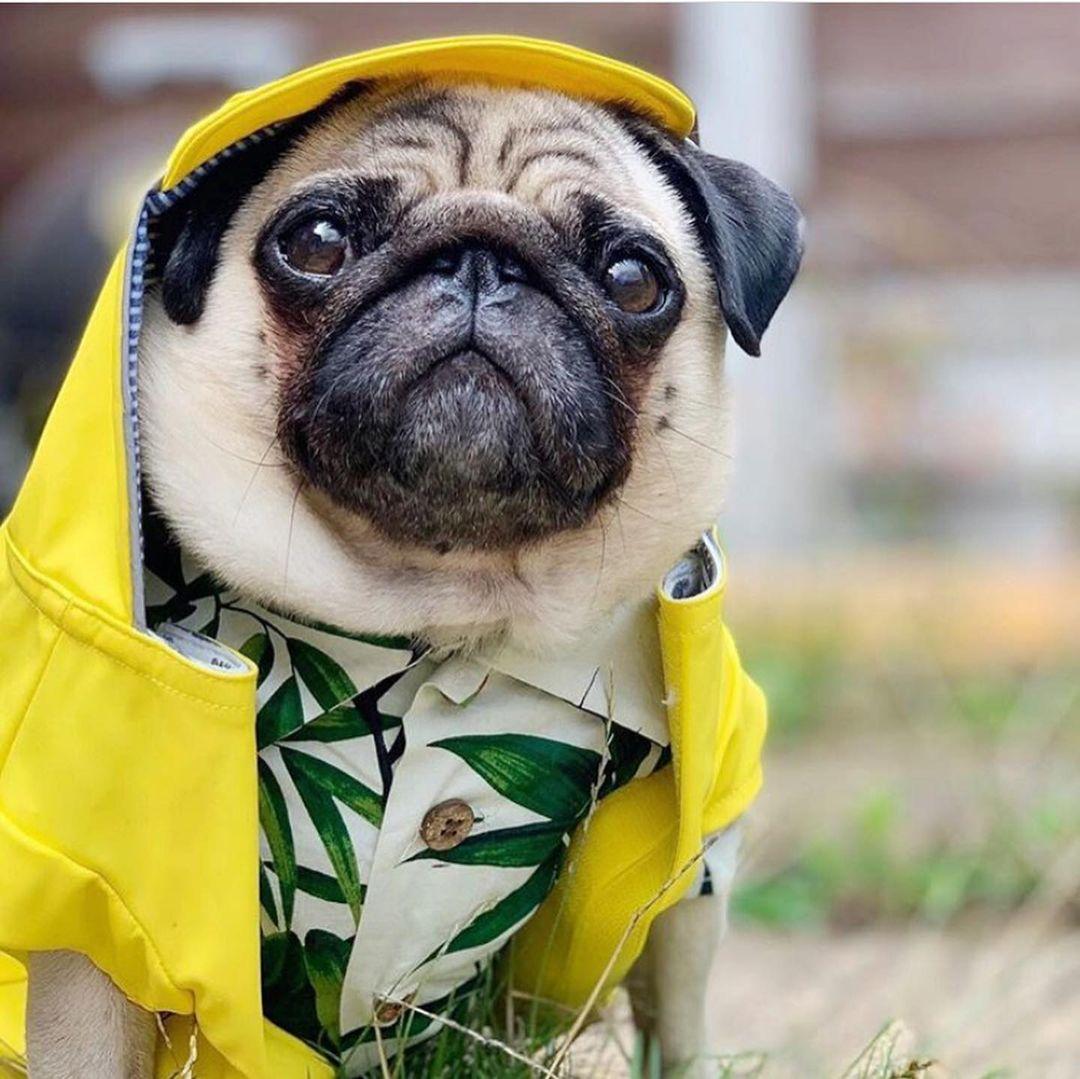 puppy hawaiian shirt