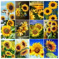 Diamond Painting Flower Sunflower 5D DIY Full Square/Round Drill Embroidery Cross Stitch Kit Rhinestone Mosaic Home Decor Mural