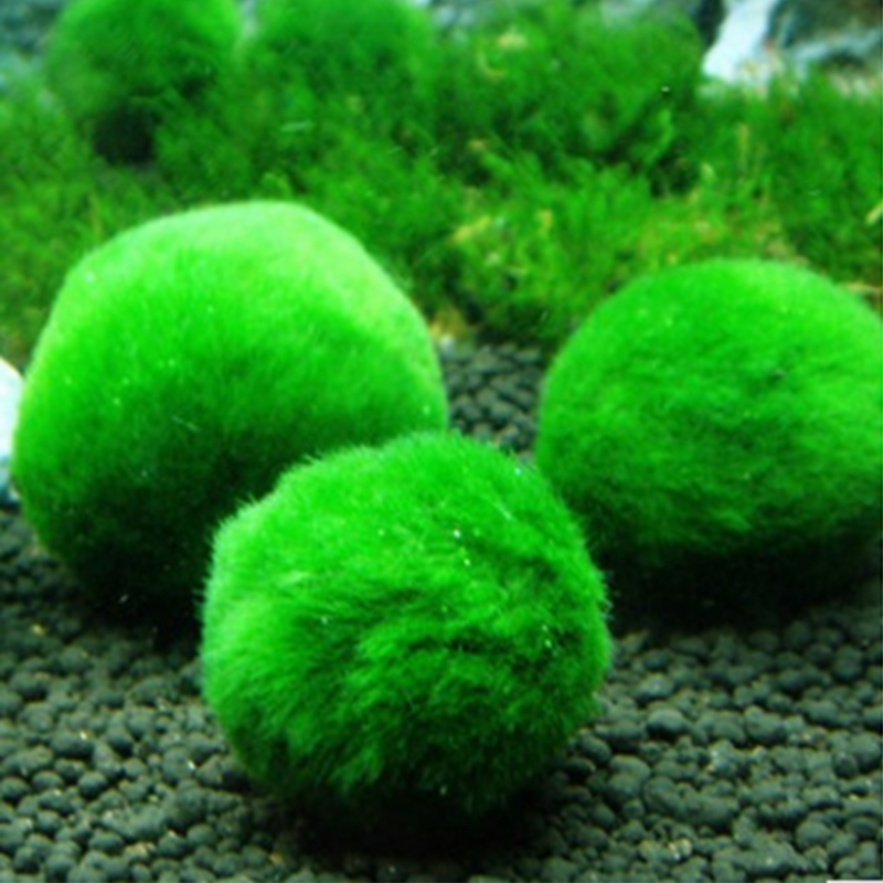 1 шт., аквариумный пейзаж, настоящая трава, аквариум для рыбы, зеленый орнамент, перспектива, трава, домашнее, настоящее зеленое растение, украшение, живой мусс