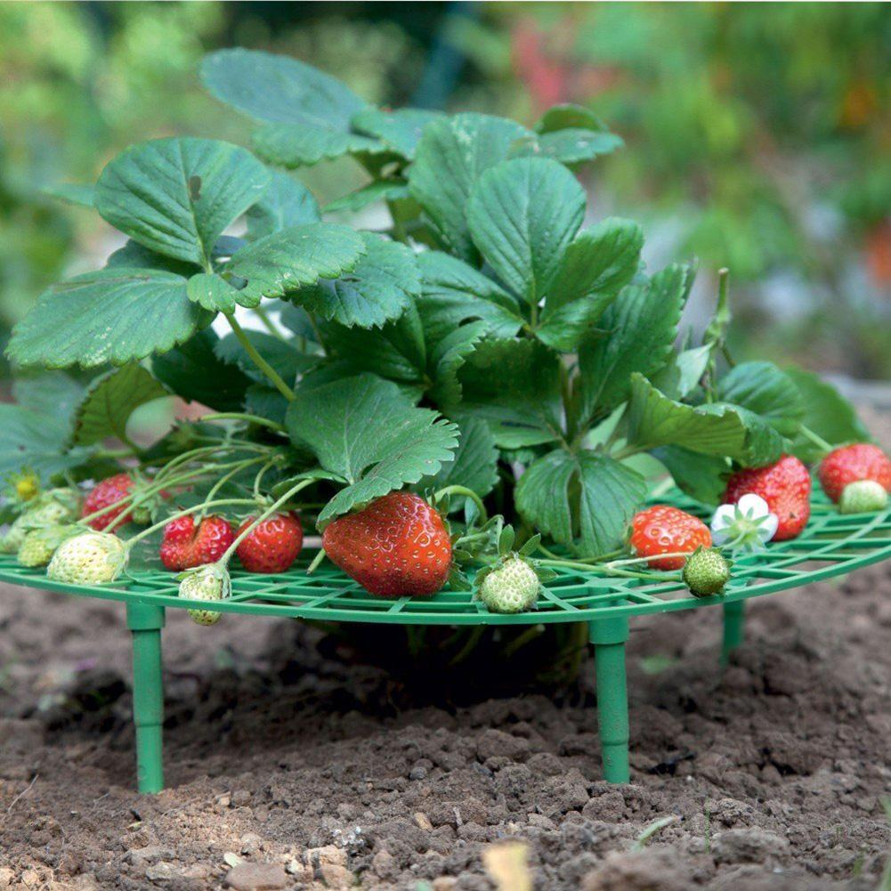 Hot Sale 5Pcs Strawberry Growing Supports Plant Rack Anti-rot Balcony Garden Holder Tool