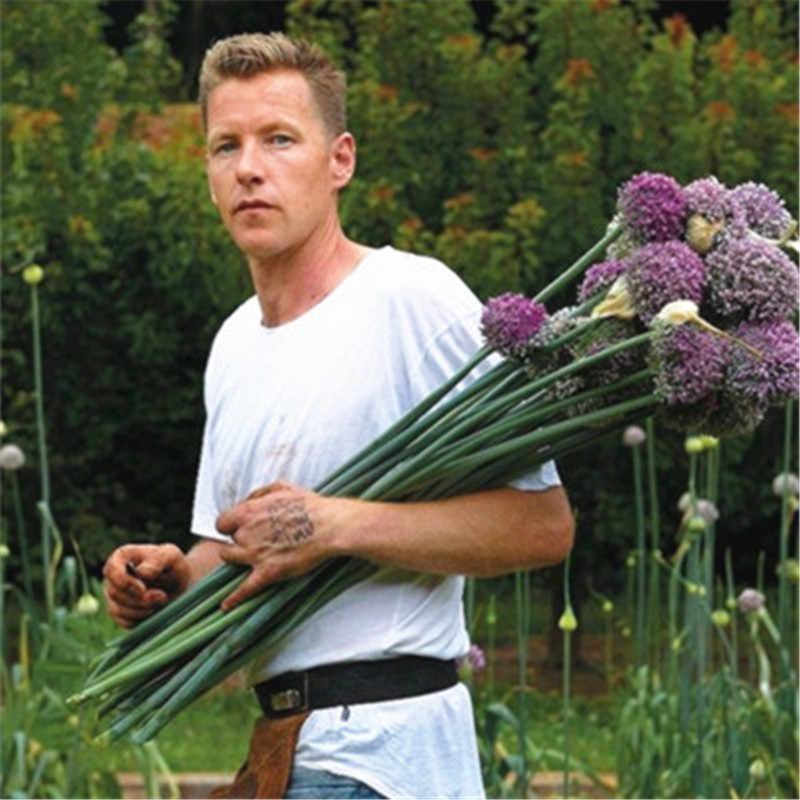 200 قطعة من نبات اليوم جيغانتيوم بصل بونساي زهور أرجوانية جميلة زهور حديقة منزلية ، نبات وعاء معمر غير معمر