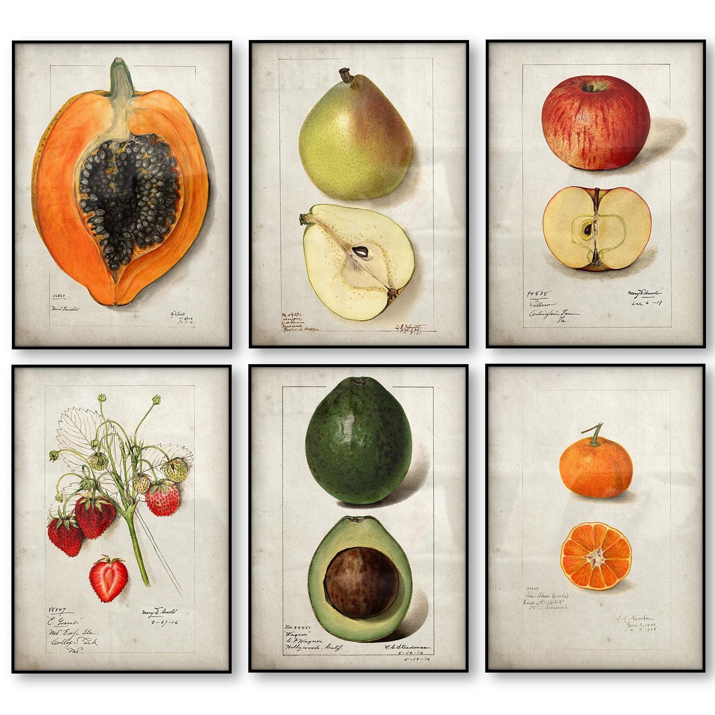 Fruit Kitchen Poster Vintage Poster Antique Canvas Print Pear Apple Orange Pineapple Wall Art Decorative Picture Canvas Painting
