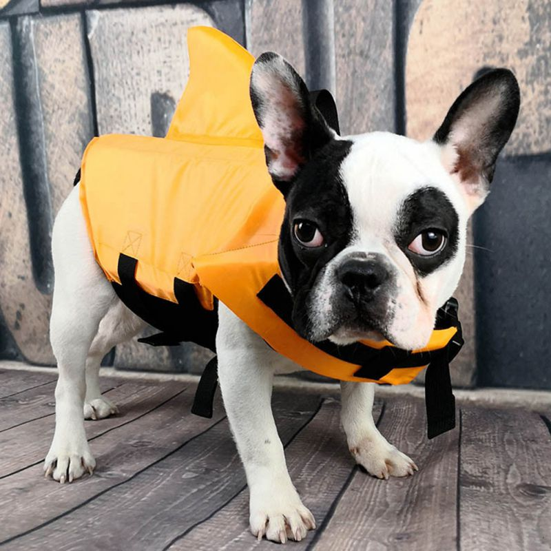 Frenchie shark life jacket