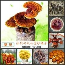 100 шт Свежие настоящие съедобные грибы суккуленты горшечные грибы