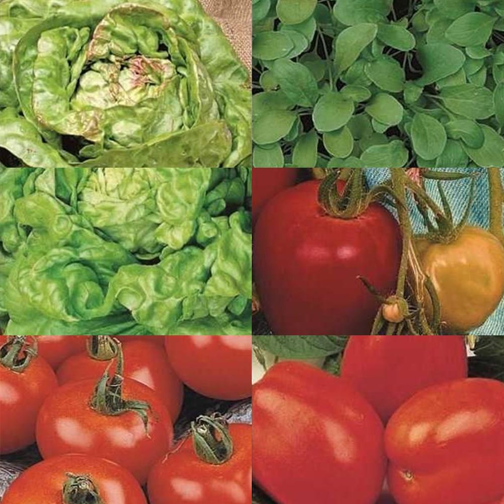 120pcs/set Vegetable Seeds Backyard Greens Lettuce Seeds Garden Supplies
